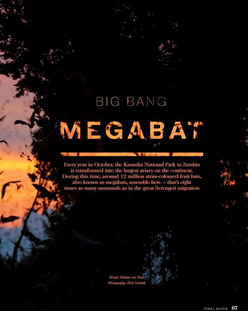 Sambia: Big bang megabat