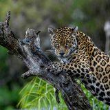 fabian_von_poser_Wildlife_001