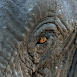 fabian_von_poser_Wildlife_007